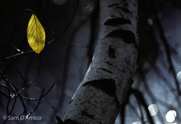 Sam D'Amico Photography